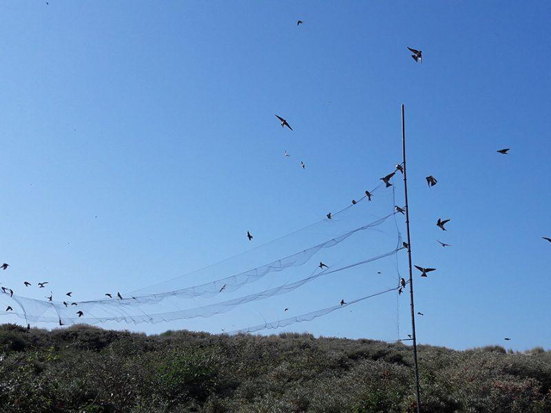 Jaarverslag 2018 Vogelringstation Nebularia